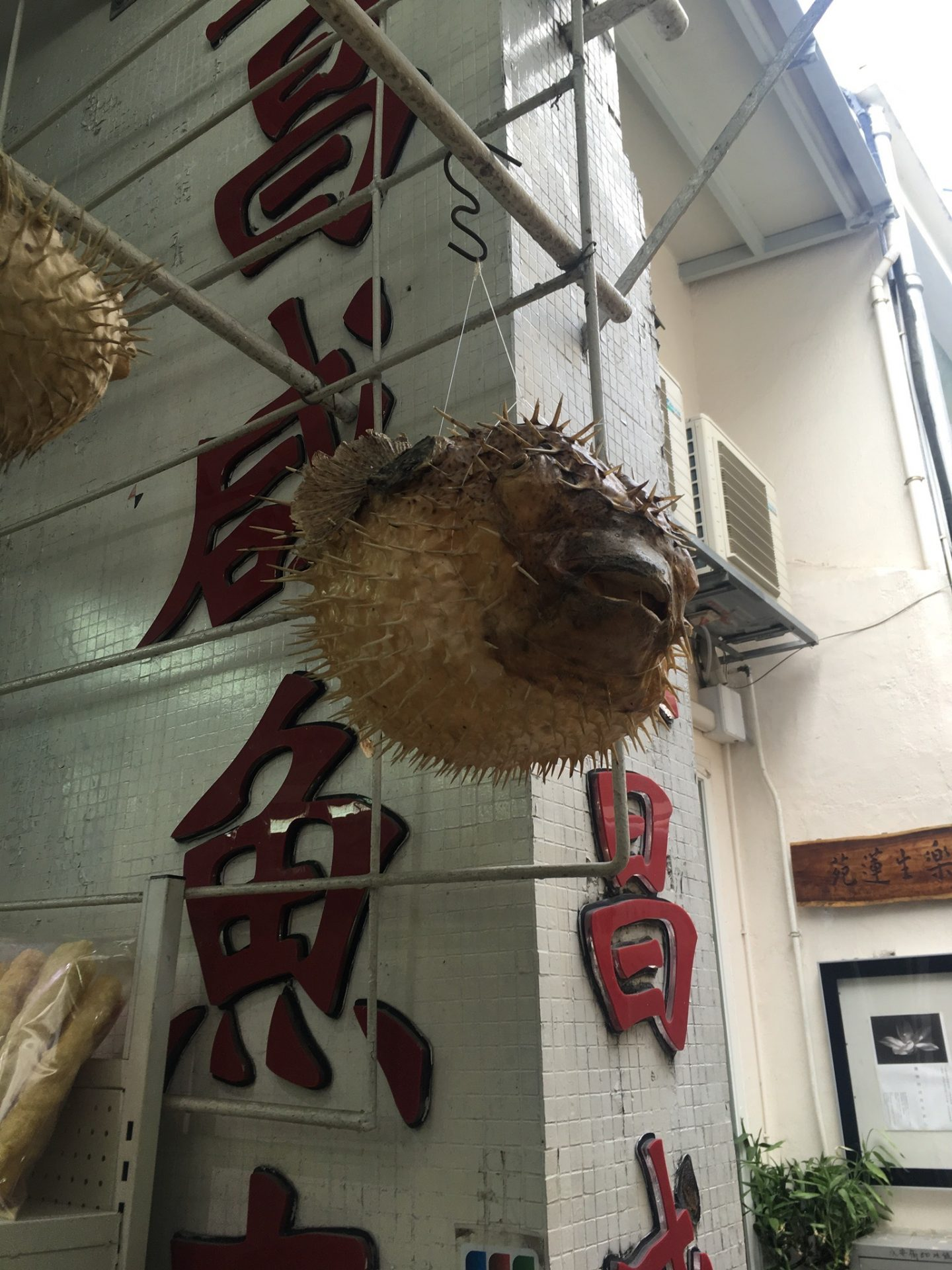 things to do in Hong Kong: a hanging puffer fish on the streets of Tai O