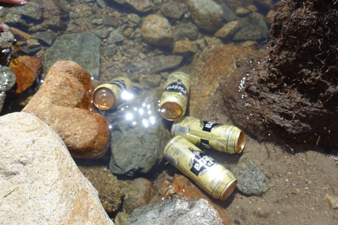 A shot of Corsian beers floating in a rock pool