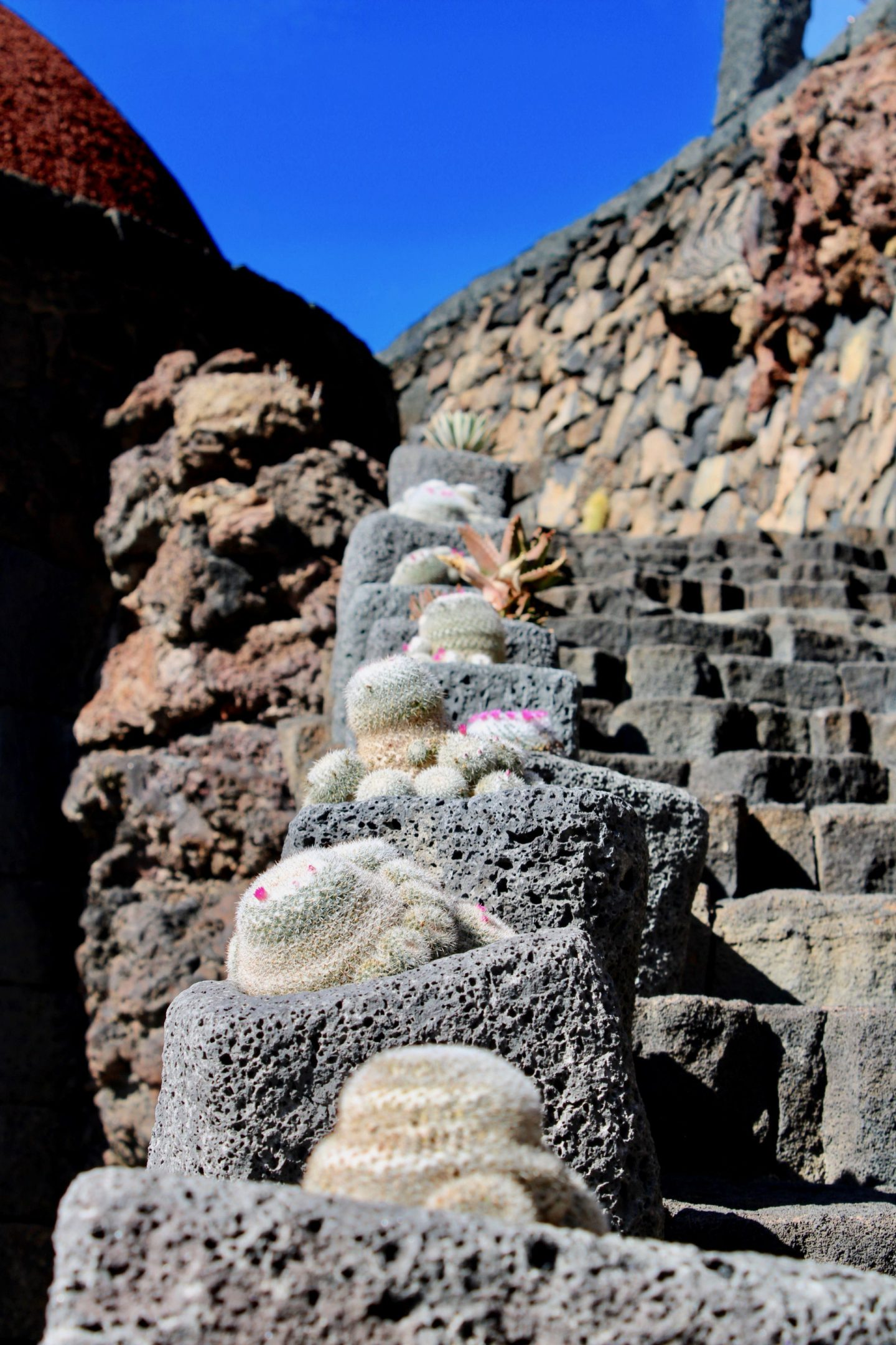 Things to do in Lanzarote: Cactus garden showing small cacti plants up the side of some stone steps, and a bright blue sky in the background