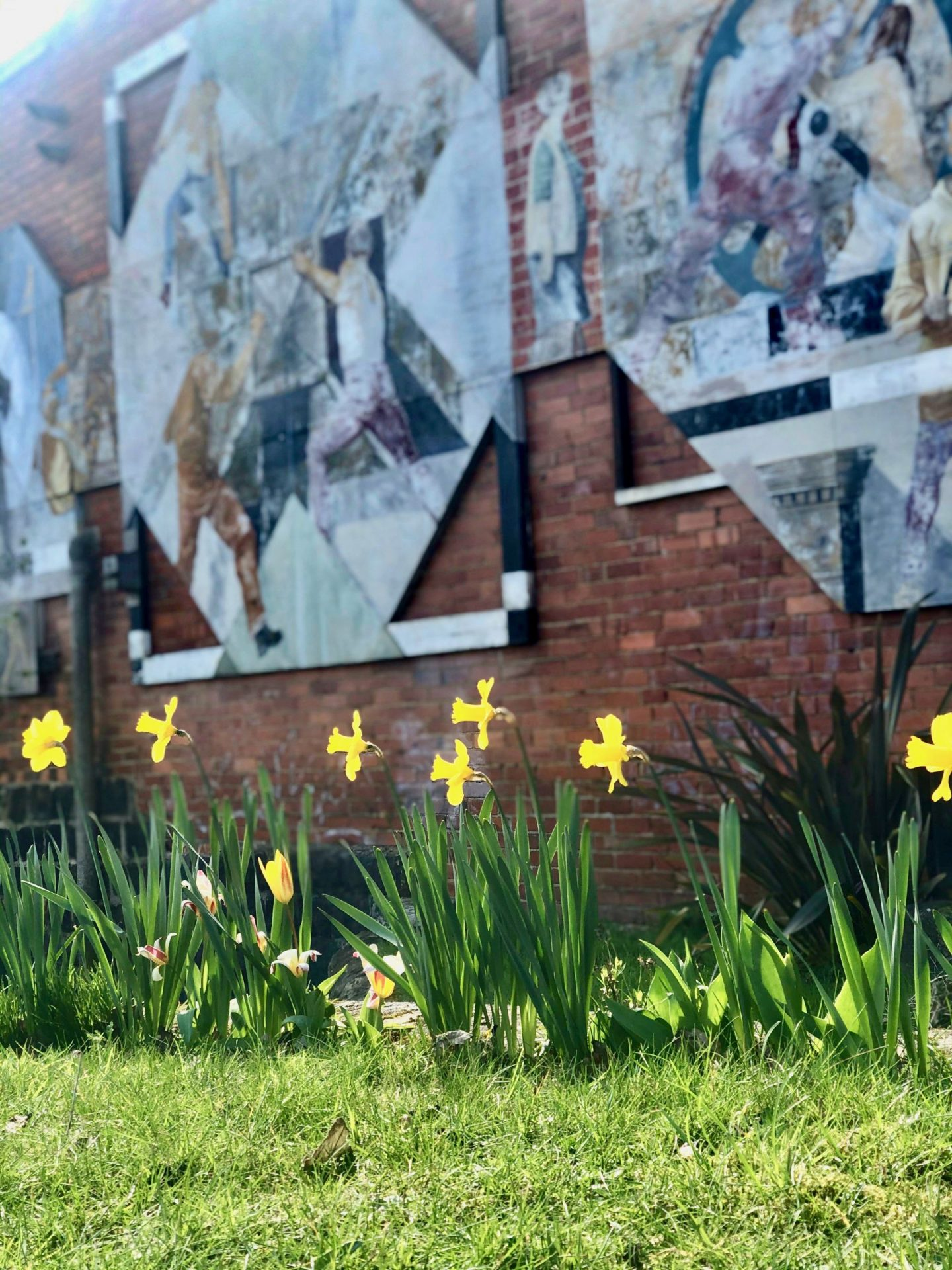 mental health during coronavirus - a line of daffodils in front of a brick wall, taken on a walk along the Leeds Liverpool Canal