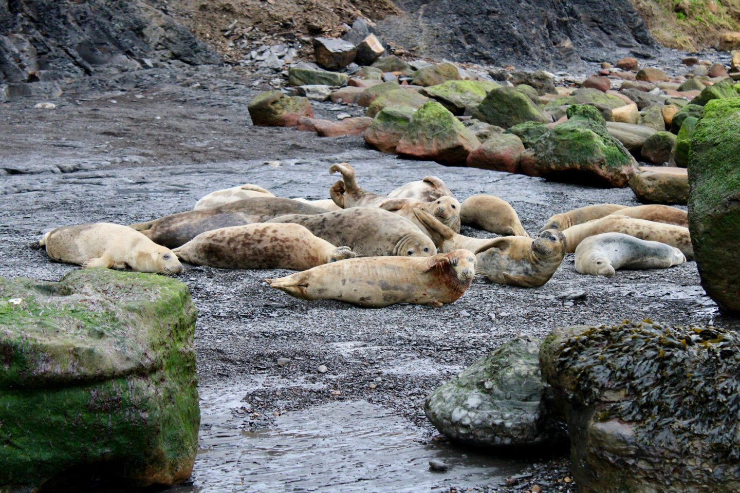 Things to do in Helmsley North Yorkshire: seals at Ravenscar